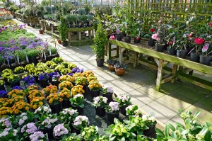 Rows of plants in a garden centre