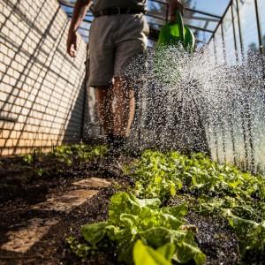 Fertilizer being sprayed in greenhouse
