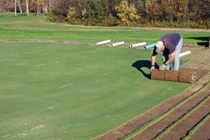 A man rolls rows of sod