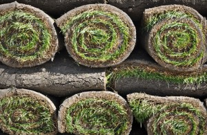 Close up of sod