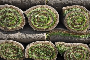 Close up of sod rolls