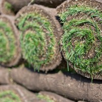 close up of sod rolls