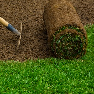 Manderley-Sod-Roll-with-Soil
