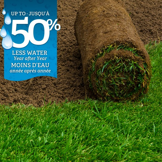 Manderley-Sod-Roll-with-Soil-Less-Water-BILINGUAL
