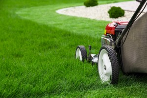 A lawn mower on natural grass