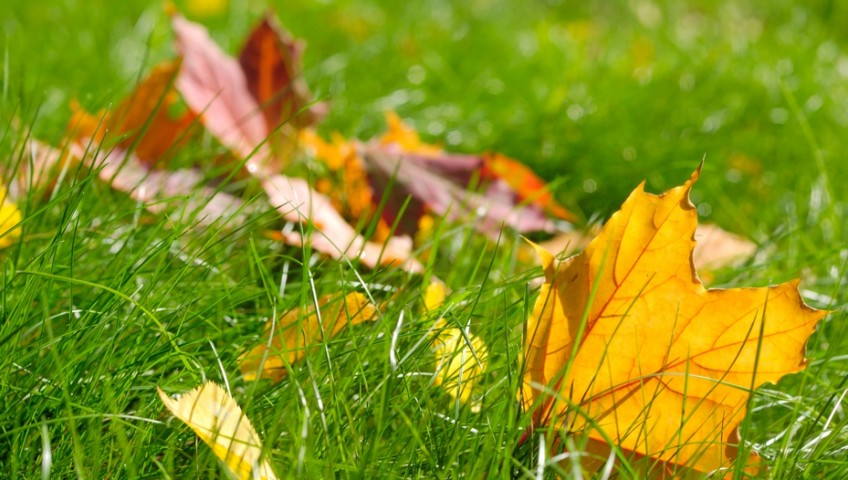 A few autumn leaves fallen on green grass
