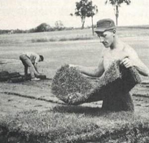 1960 sod