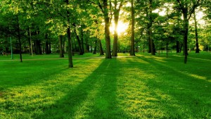 Grass-Produces-More-Oxygen-Than-Trees-manderley-Turf