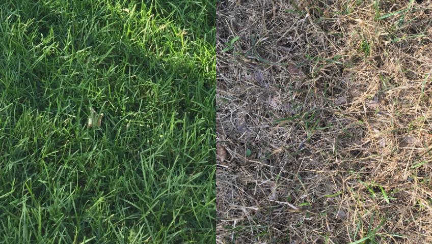 Dormant-Lawn-final-848x480.png
